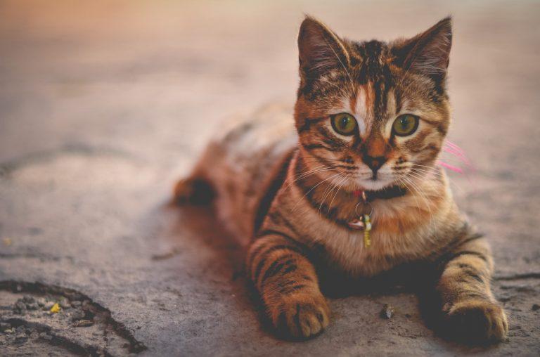 Cats & Your Garden