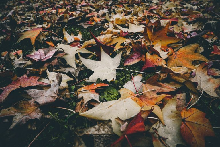 Gold in the Garden: Fallen Leaves