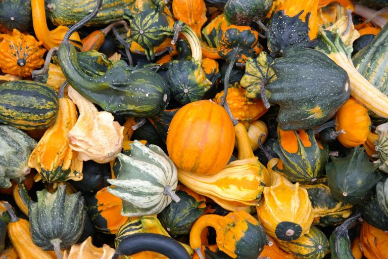 5 Winter Squash Varieties for the Frugal Gardener Short on Space