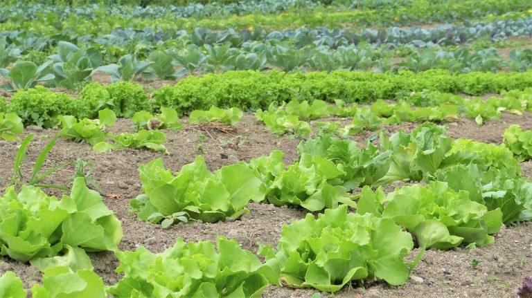 Garden Planning: Crop Rotation