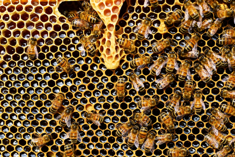 Why Bees Are Important to Humans
