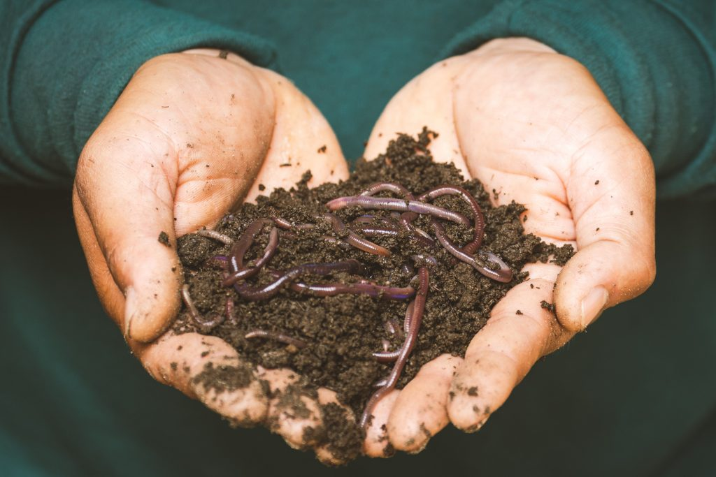 Free Worms
