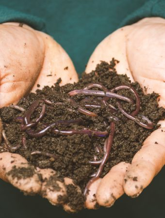 How To Get Free Garden Worms
