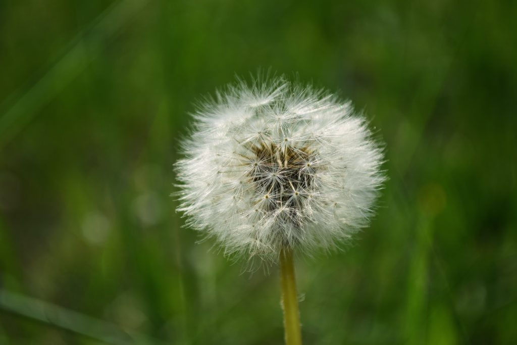 ways to banish weeds