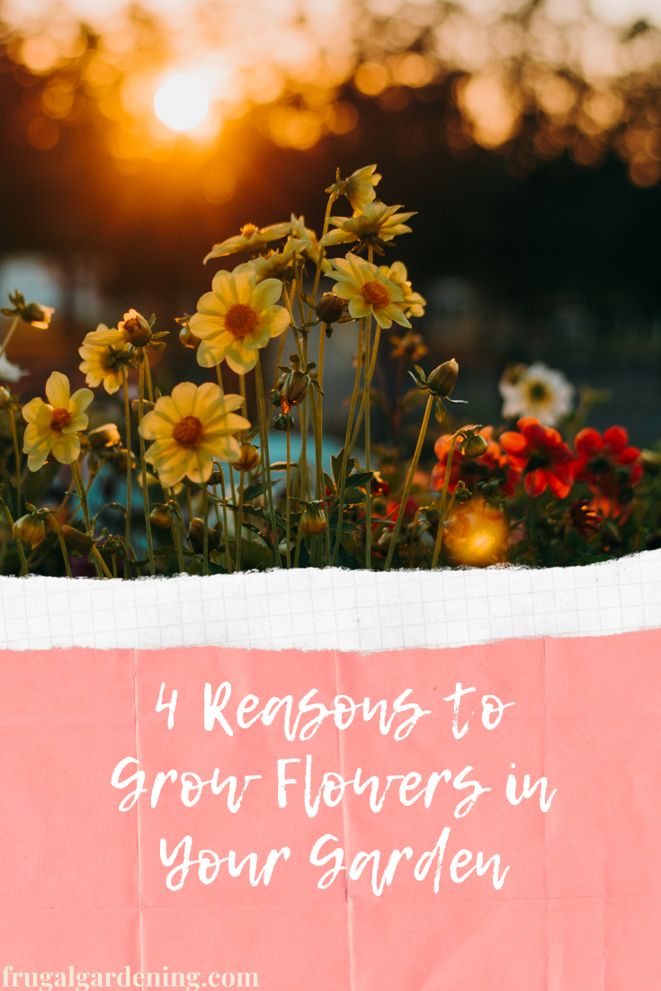 4 Reasons to Grow Flowers in Your Garden