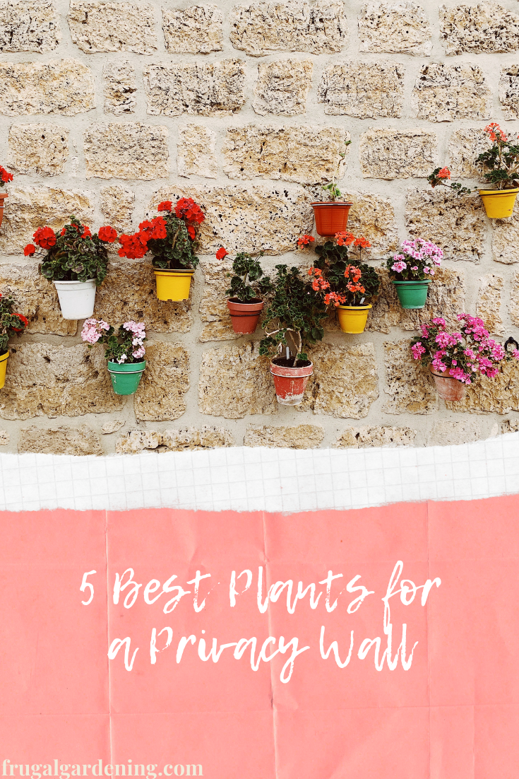 5 Best Plants for a Privacy Wall