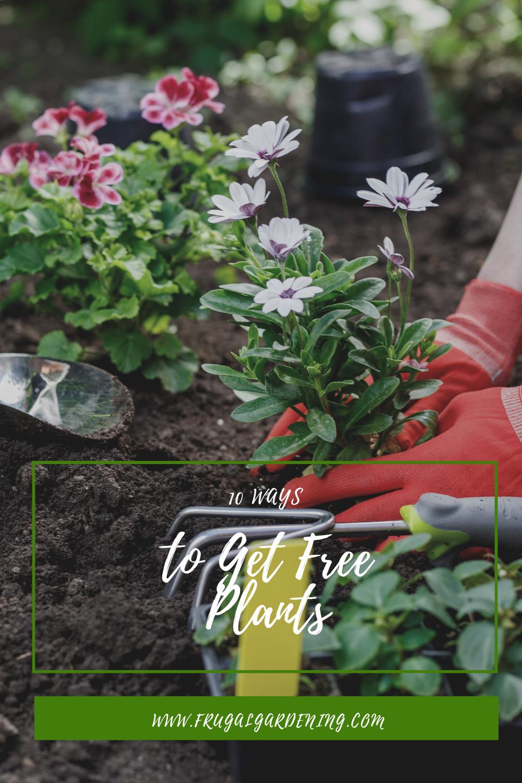 10 Ways to Get Free Plants