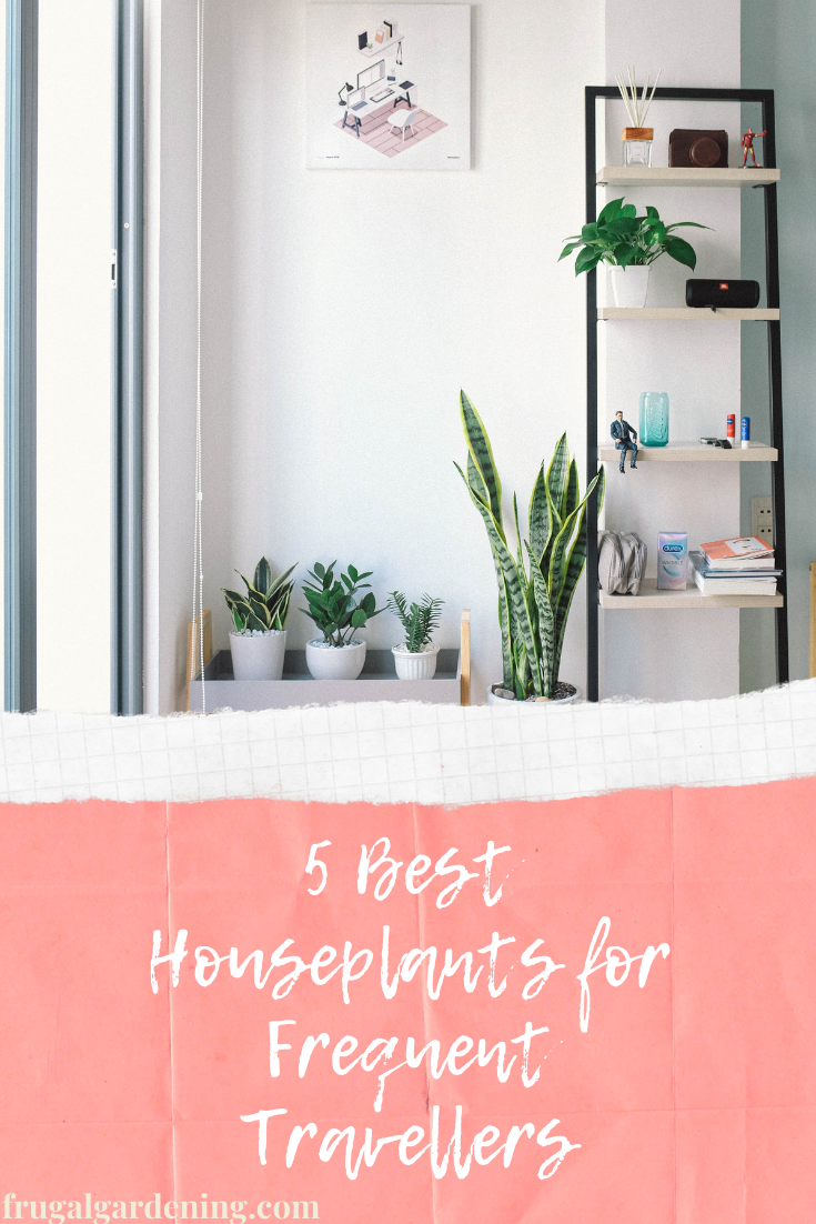 5 Best Houseplants for Frequent Travellers