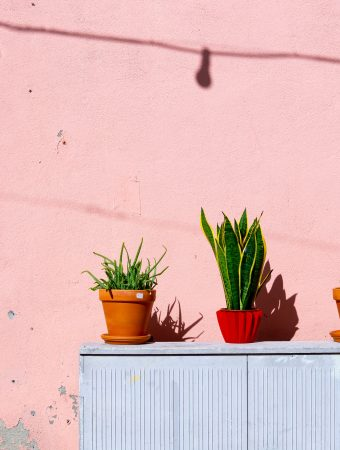 plants for frequent travelers