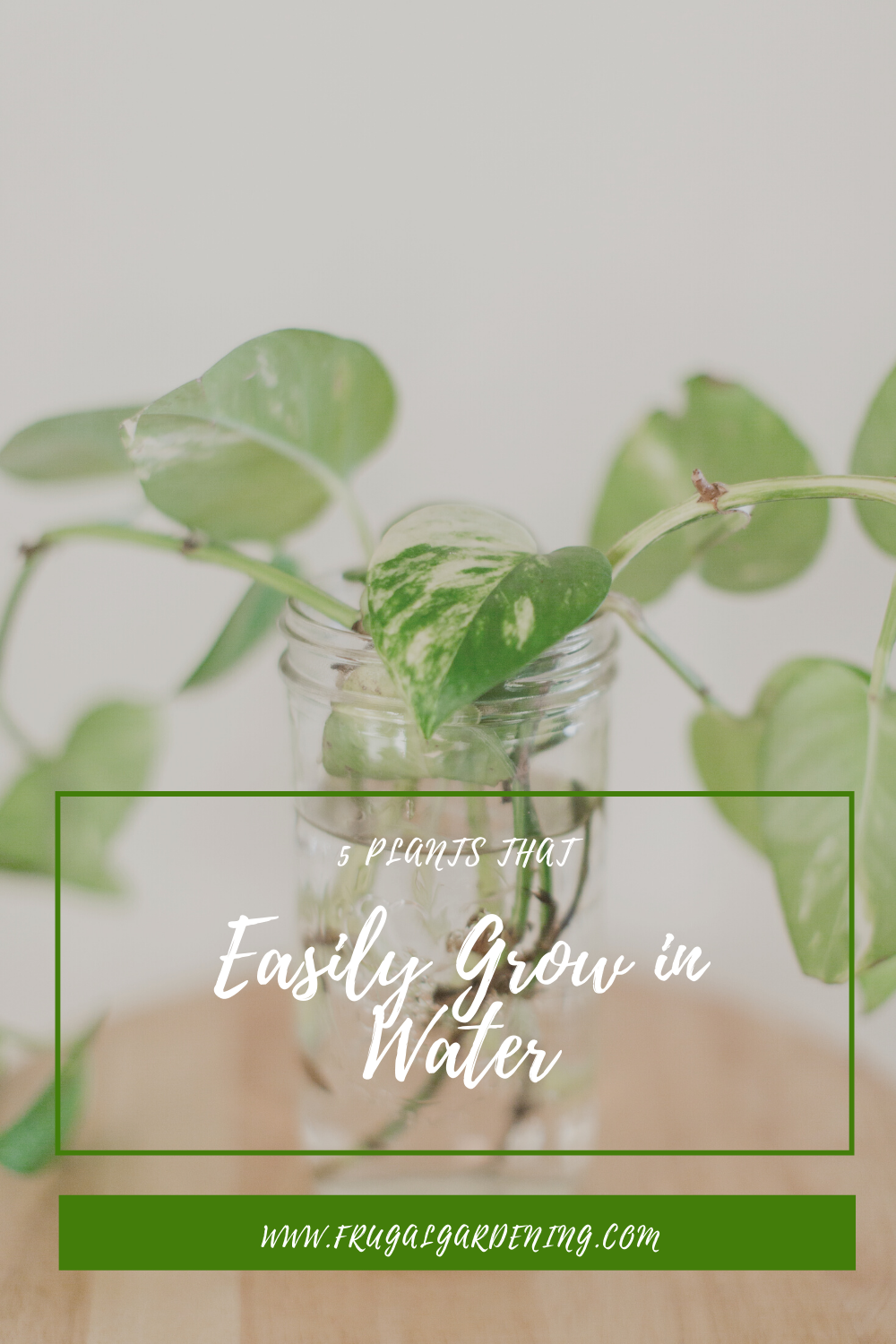 5 Plants That Easily Grow in Water