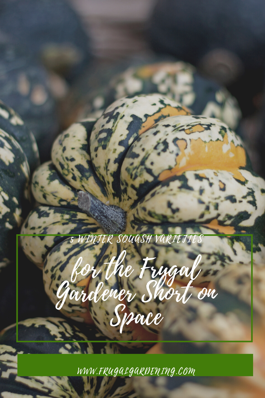 5 Winter Squash Varieties for the Frugal Gardener Short on Space