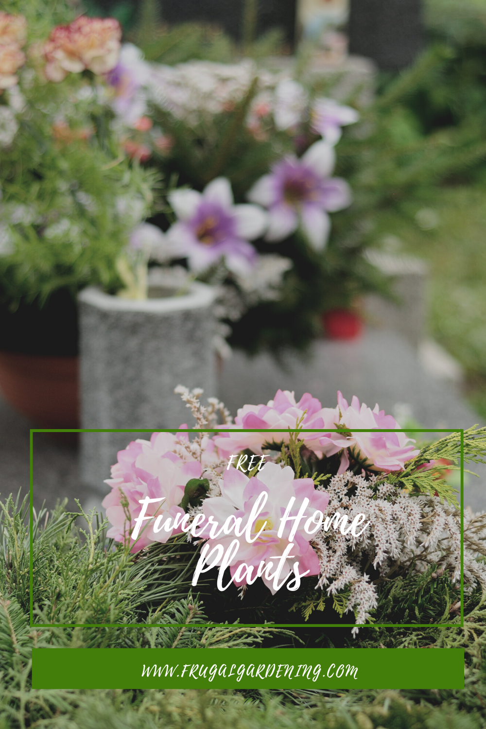 Free Funeral Home Plants