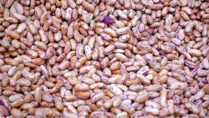 Pre-Packaged Seeds vs. Fresh Seeds