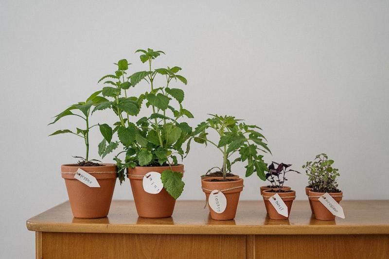 factors that affect plant growth