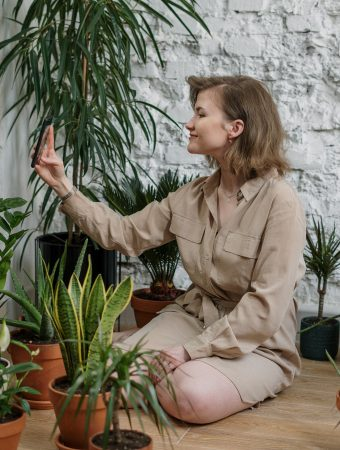 Indoor plants that can purify air