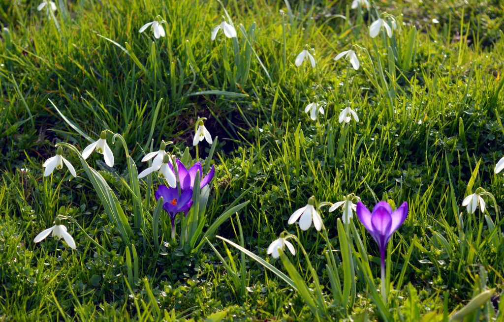spring garden clean-up