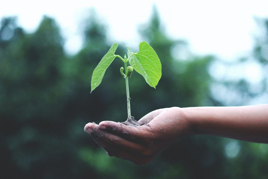 reasons why seeds don't germinate
