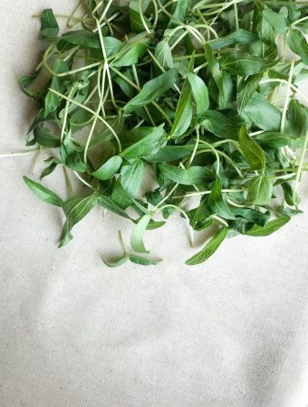 where to buy seeds for microgreens