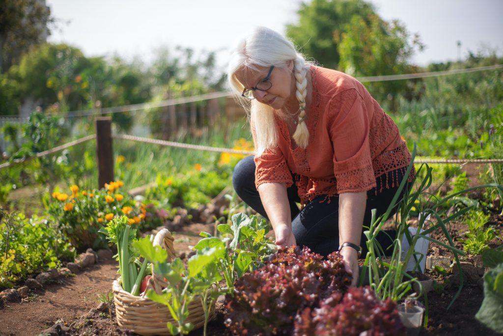 gardening in the heat