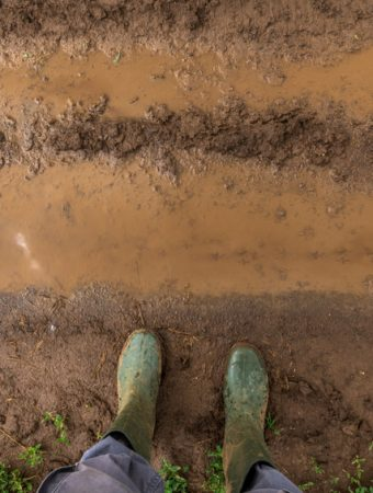 protect garden from excessive rainfall