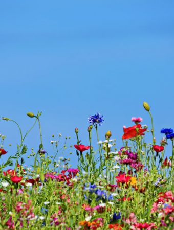 why you should plant wildflower seeds in the fall