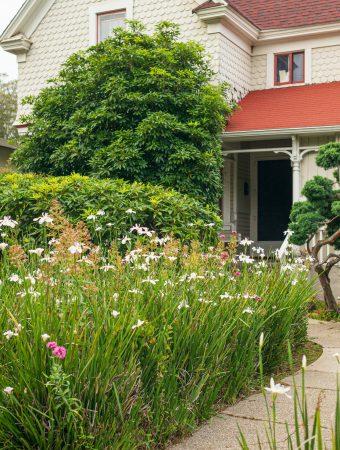 essence of the garden